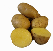 German Butterball Seed Potato for Sale