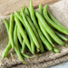 Top Crop - Bush Bean Plant