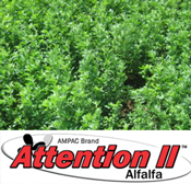 attention alfalfa seed