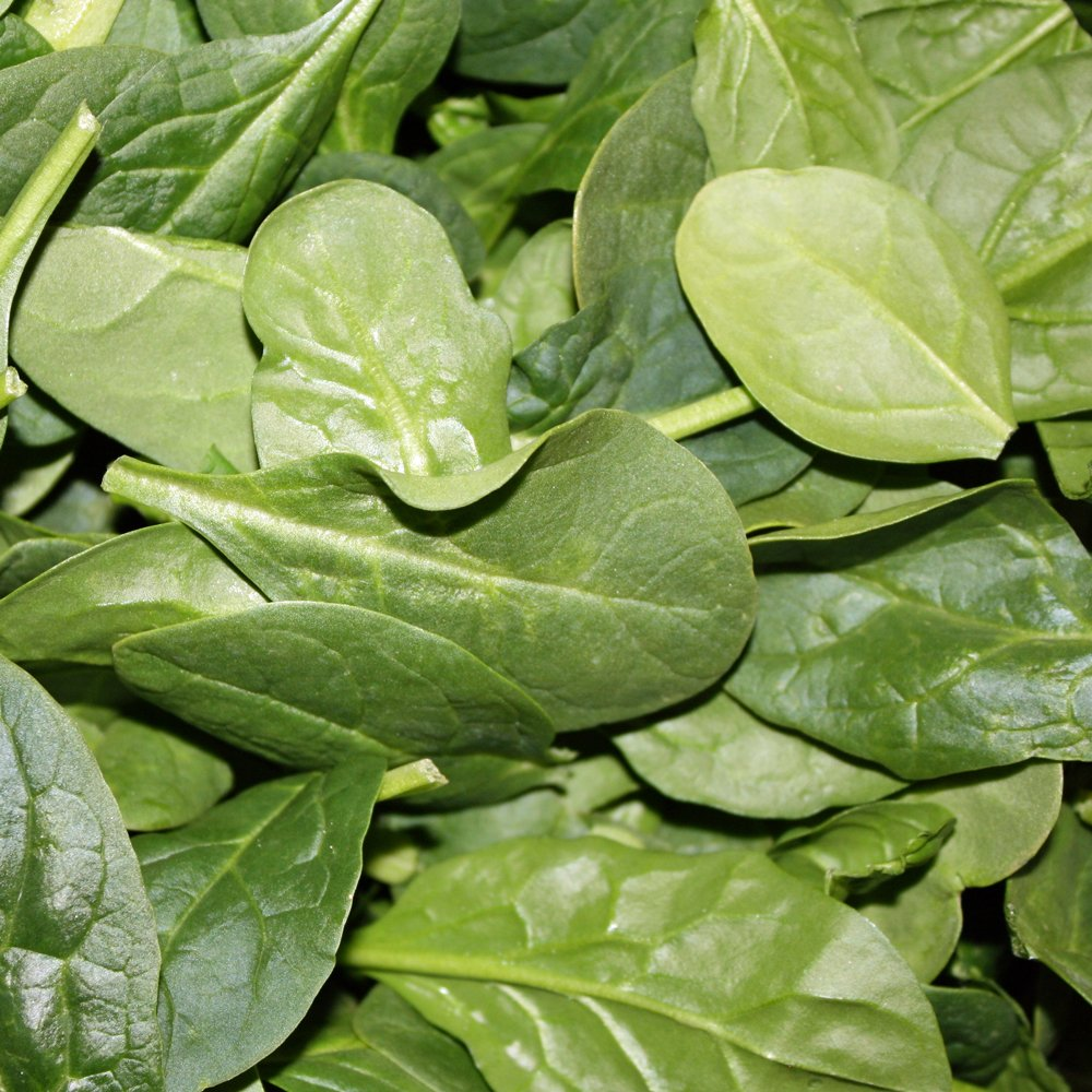 Baby S Leaf Spinach Plants For Sale Free Shipping