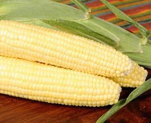 Bodacious Sweet Corn Plant