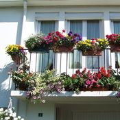 Plants for Balconies