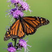 Plants for Butterflies
