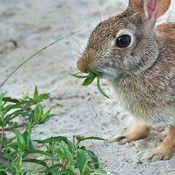 Rabbit Resistant Plants