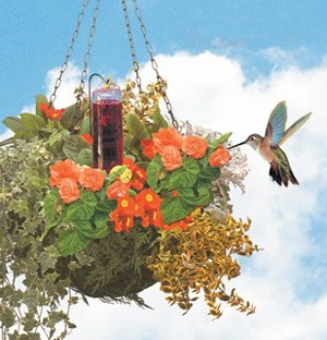 hummingbird hanging bottle walmart feeder antique capacity com ip red