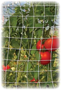 Garden Trellis Netting holding tomatoes