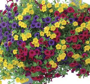 trixi gold and bold flower plants combination growjoy com