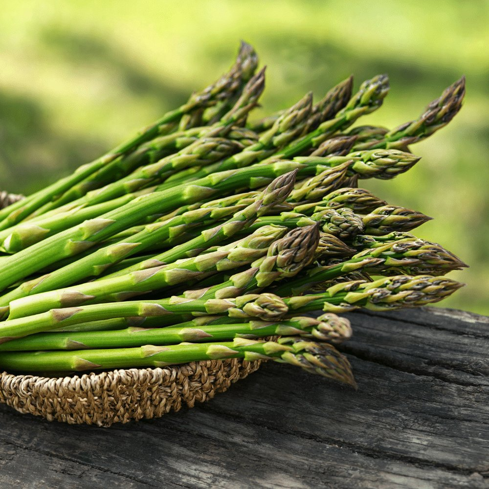 Guelph Millennium Asparagus Plants For Sale Free Shipping