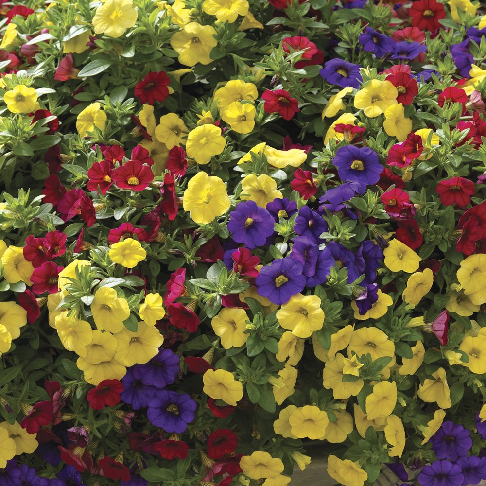 Kwik Kombos Callie Color Wheel Mix Improved Flower Combinations