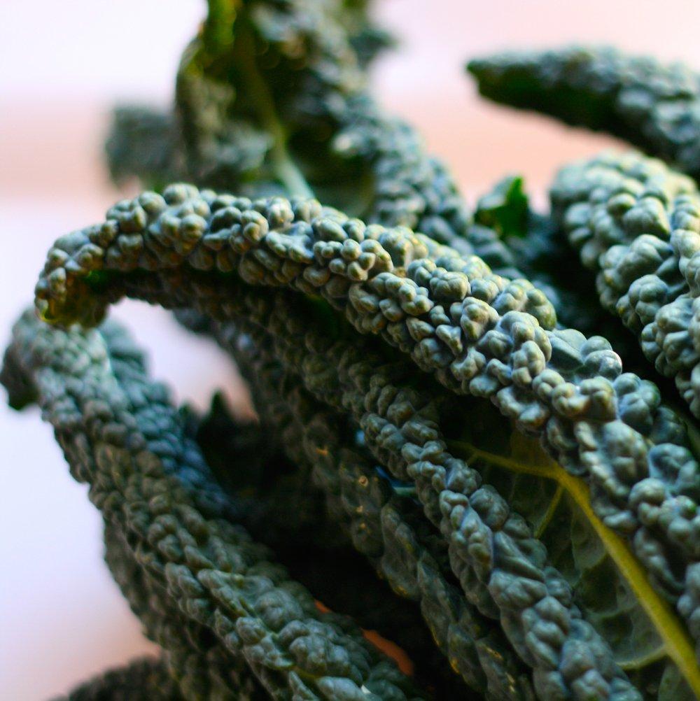 Planting Kale In Pots: Lacinato Kale Plants For Sale
