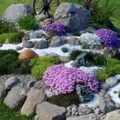 Plants for Rock Gardens