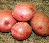Red Lasoda Seed Potato for Sale