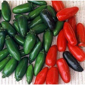 SERRANO Hot Pepper Plant - Garden Harvest Supply Inc