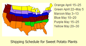 shipping schedule for sweet potato plants